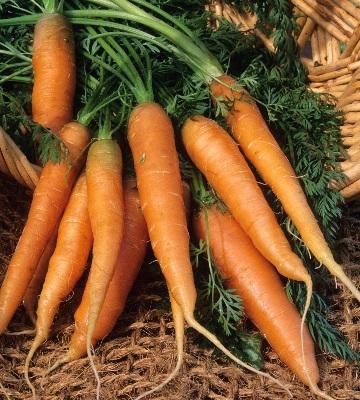 carotte nantaise