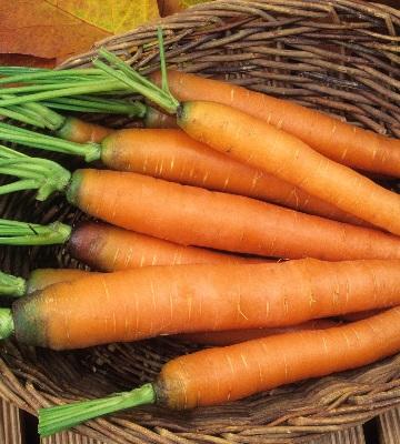 carotte touchon