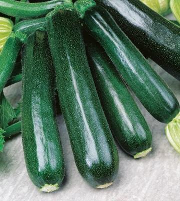 courgette verte noire maraichere