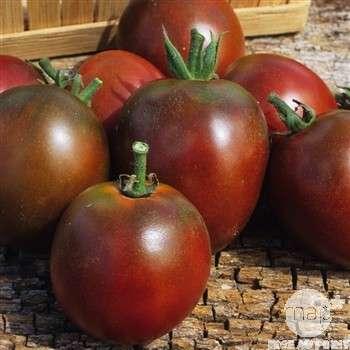 legume tomate crimee
