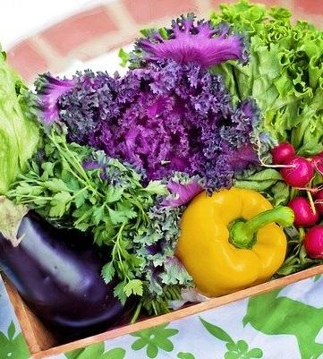 légumes carré potager