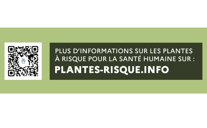 Plantes risque info