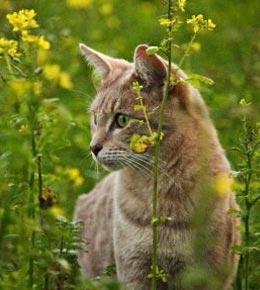Protéger son chat des parasites