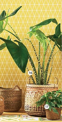 16. Alocasia 'Zebrina' En pot Ø 27 cm. H. 100 cm (789674) - 17. Rhaphidophora minima En pot Ø 13 cm (870237)