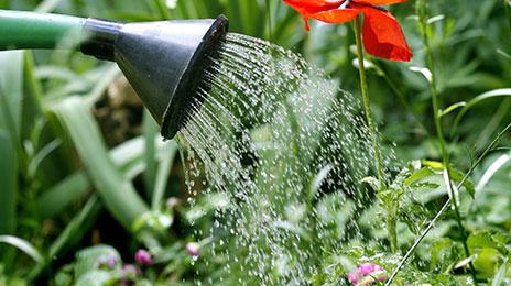 Économiser l'eau au jardin et balcon