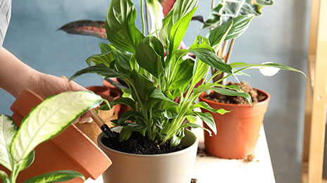 Sauvez ses plantes