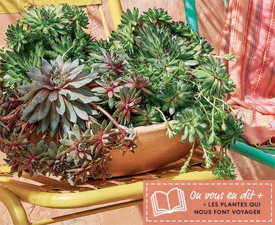 Les plantes qui nous font voyager