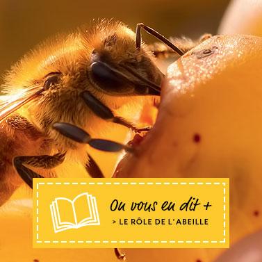Le rôle de l'abeille