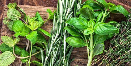Graines et plants d'aromatiques