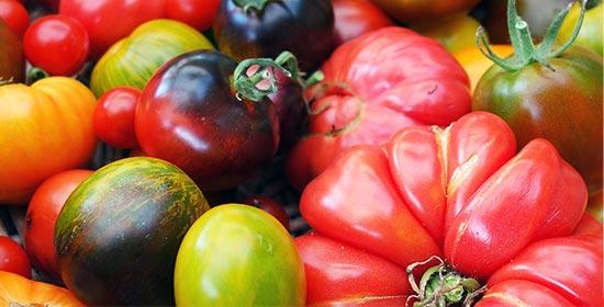Graines et plants de tomates