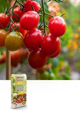Terreau légumes & petits fruits