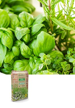 Terreau plantes aromatiques