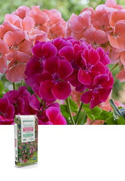Terreau plantes fleuries & géraniums