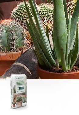 Terreau Terre de Vie® cactées & plantes grasses
