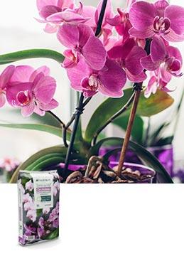 Terreau Terre de Vie® orchidées