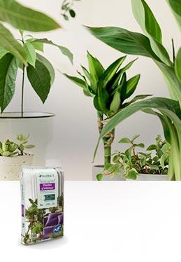 Terreau Terre de Vie® plantes d'intérieur