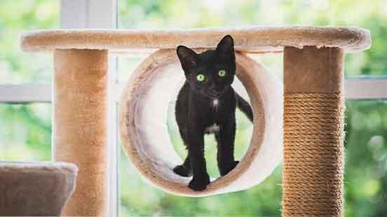 Choisir et installer un arbre à chat
