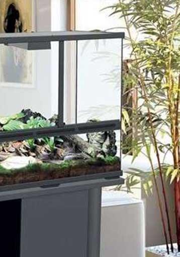 Comment choisir un terrarium selon votre reptile ?