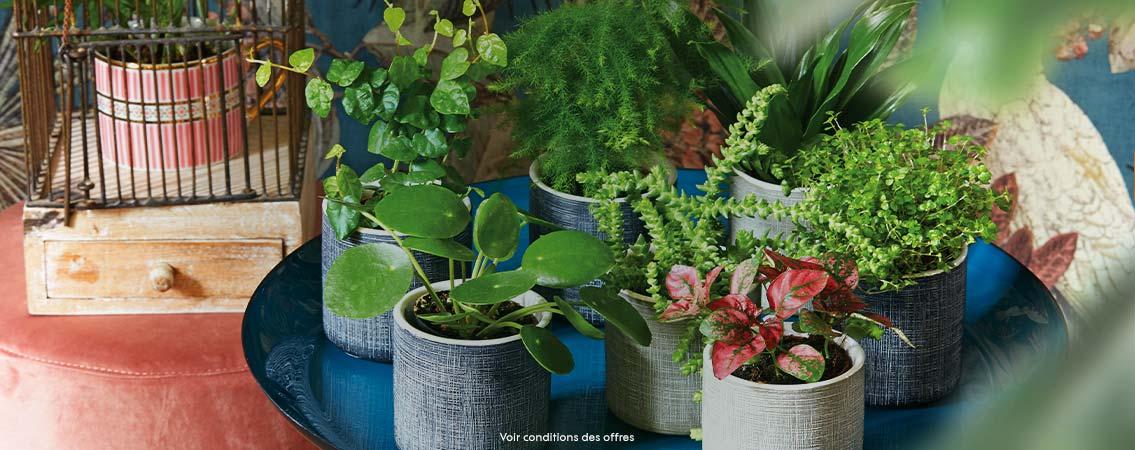 3 = 2 • Plantes d'intérieur