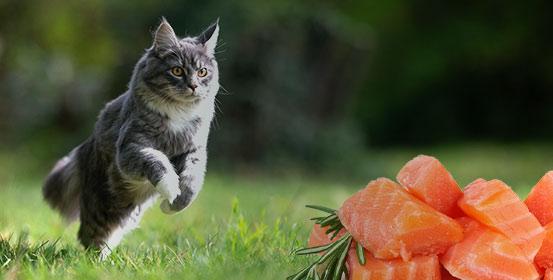 Alimentation naturelle pour chats