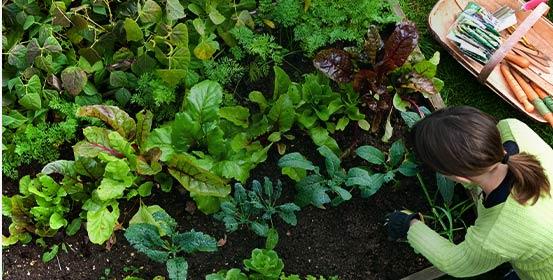 Jardinage écologique & permaculture