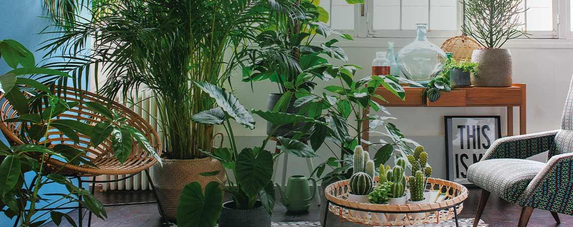 Conseils pour vos plantes d'intérieur