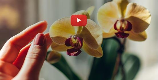 Mes orchidées à lhonneur