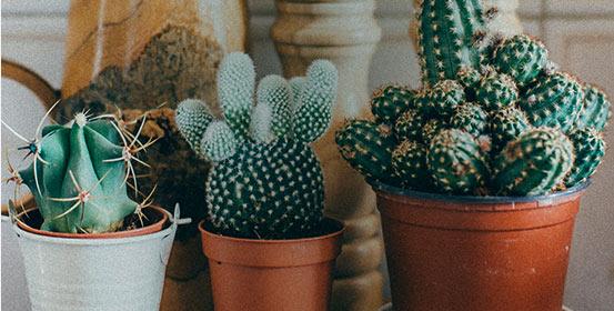 Mes cactus et plantes grasses