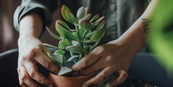 Plantes facile à vivre