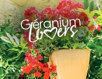 Géranium Lovers