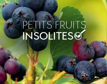 Petits fruits insolites