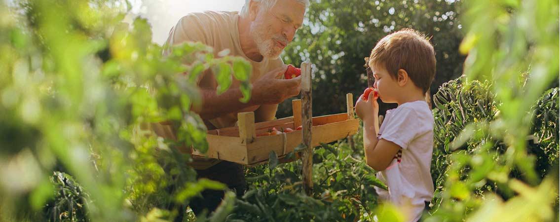 Des offres vertes & fleuries pour votre extérieur