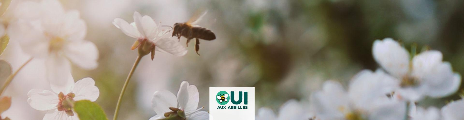 Parce que la survie des abeilles est fragile