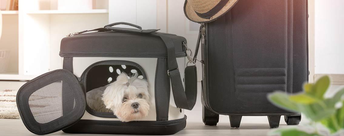 Voyage tout confort pour votre animal